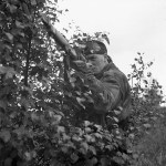 1944-10-09 Cpl. B. B. Arnold, sniper of the Scout Platoon of the Queen's Own Cameron Highlanders of Canada at Fort de Brasschaat, Belgium (L&AC MIKAN 3409534)
