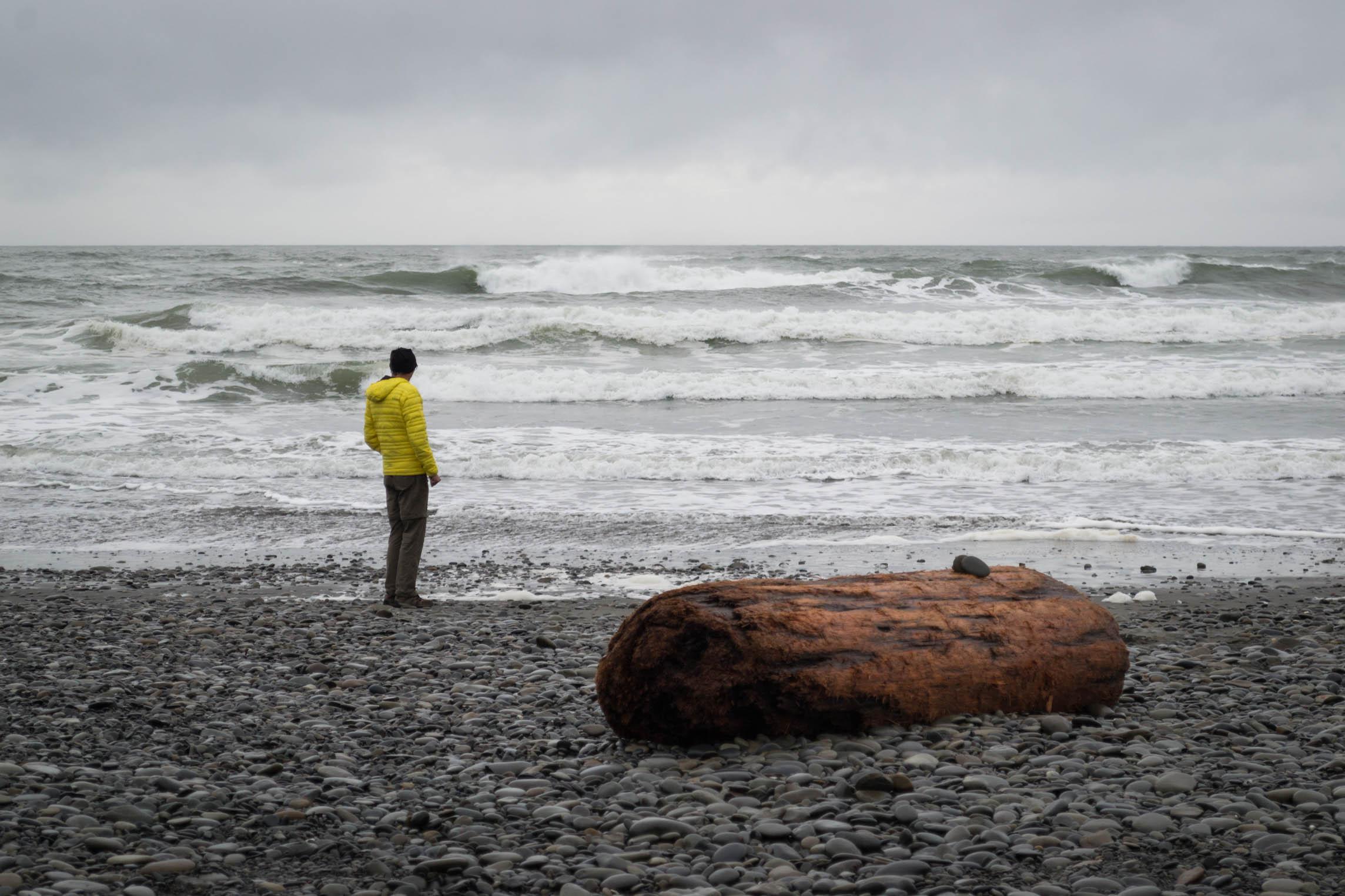 Un rondin s'est échappé de la meute pour mieux voir l'océan