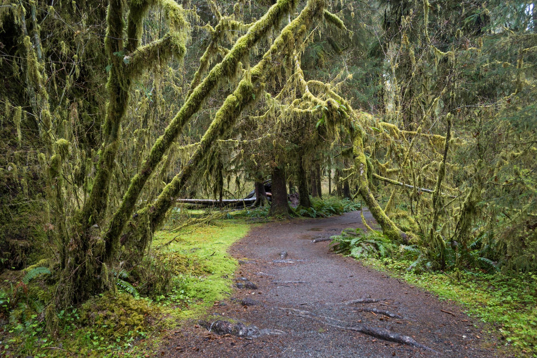Une forêt qui contient plus de mousse que de feuilles ?!