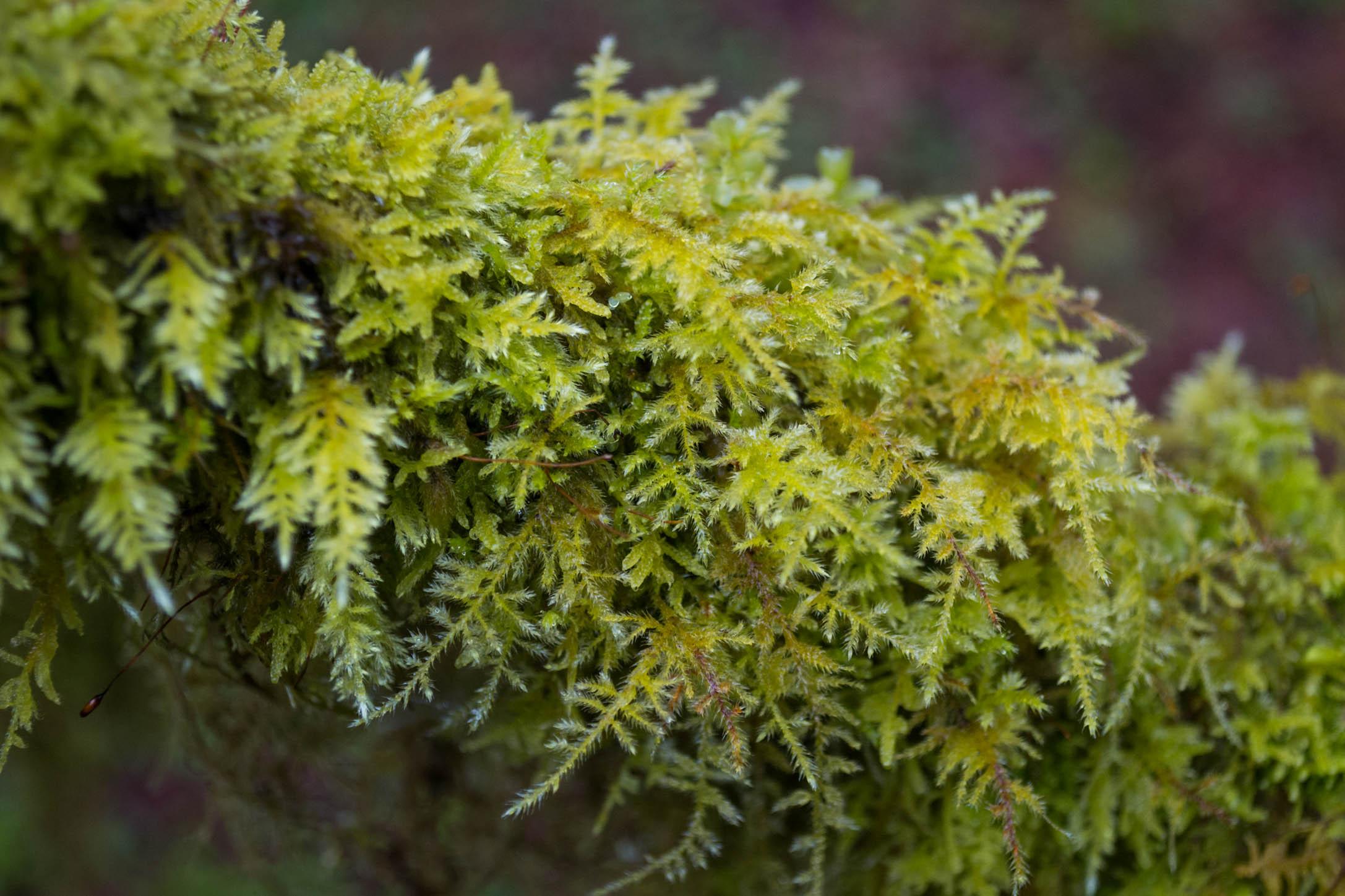"""La mousse est omniprésente dans les """"Rain Forest"""""""