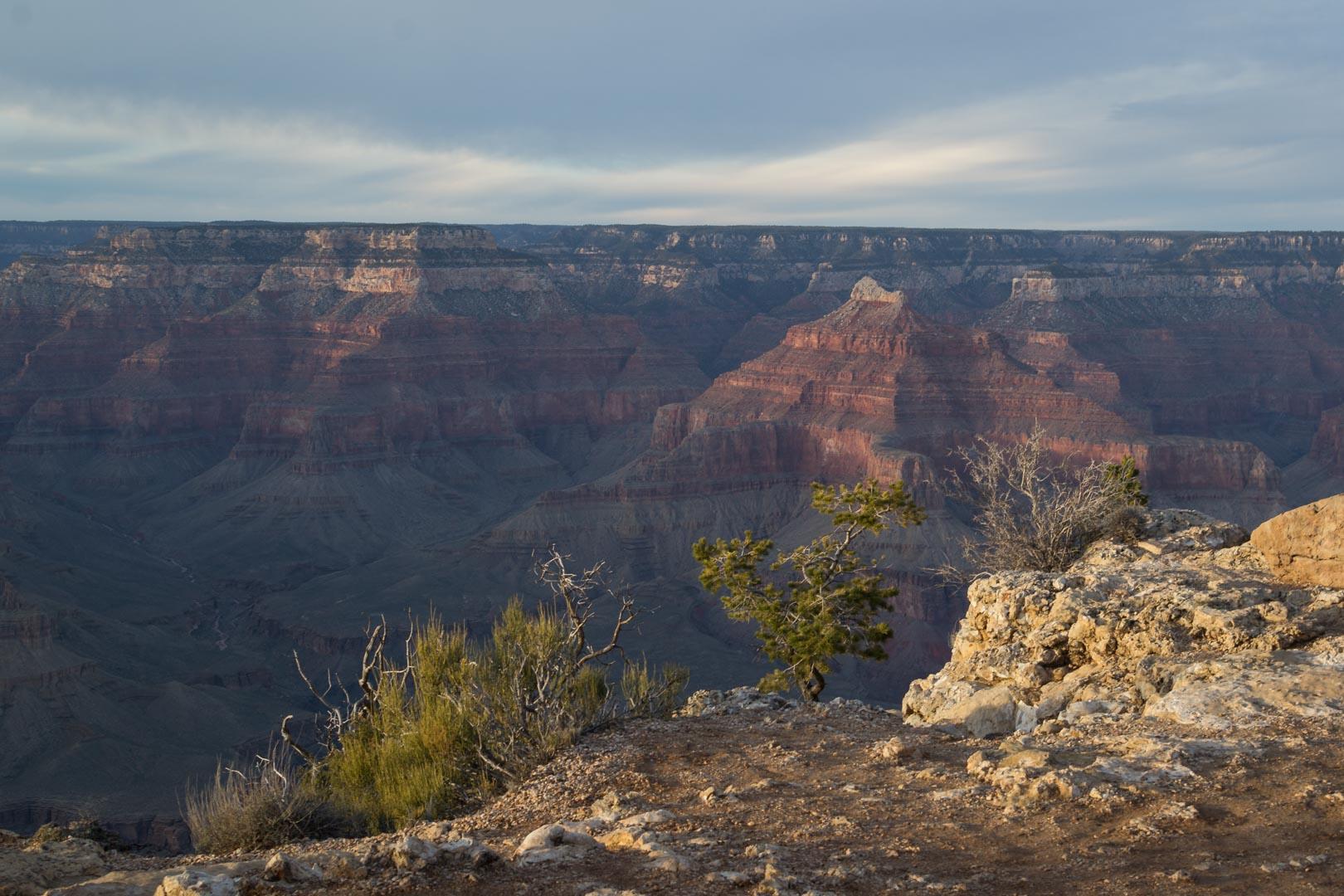 Posé sur un rocher devant l'immensité du canyon