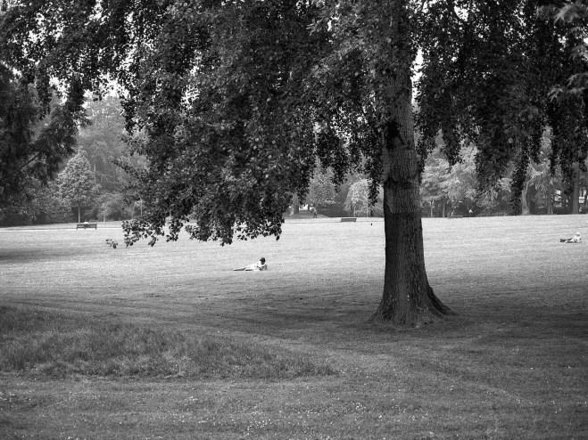 Le parc de Procéder (Nantes)