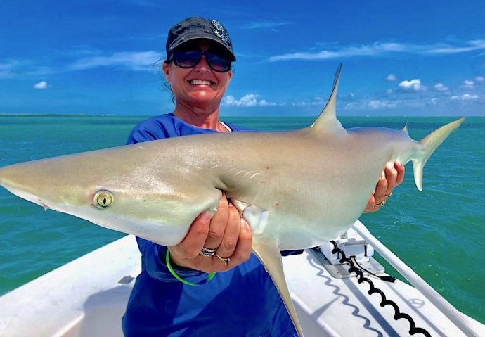 Blacknose Shark, Sanibel Island Fishing, Catch & Release, Captiva Island, Monday, April 15, 2019.