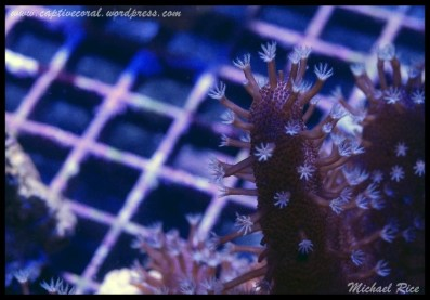 leather_coral_DSC9656