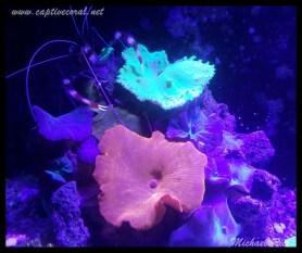 mushroom_coral2015-12-09 03.53.49