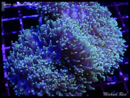 mushroom_coral_DSC1100