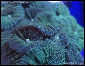 mushroom_coral_dsc2627
