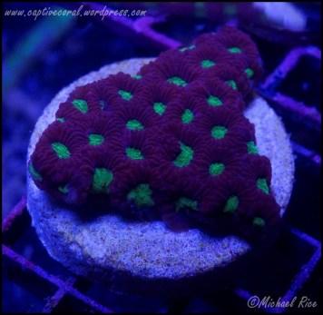 war_coral_DSC7977
