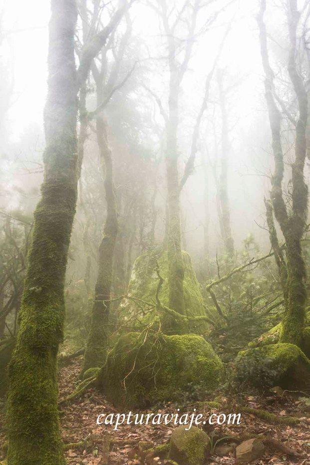 Taller de Fotografía de Paisaje - Parque Natural de los Alcornocales - 02