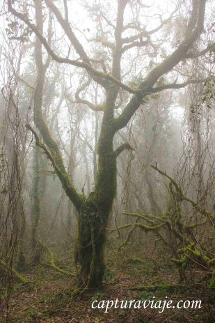 Taller de Fotografía de Paisaje - Parque Natural de los Alcornocales - 08 - M