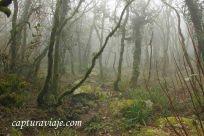 Taller de Fotografía de Paisaje - Parque Natural de los Alcornocales - 12 - M