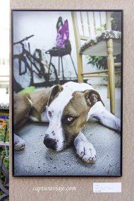 32 - PFC2013 - Retrato perro - Miguel Rayón