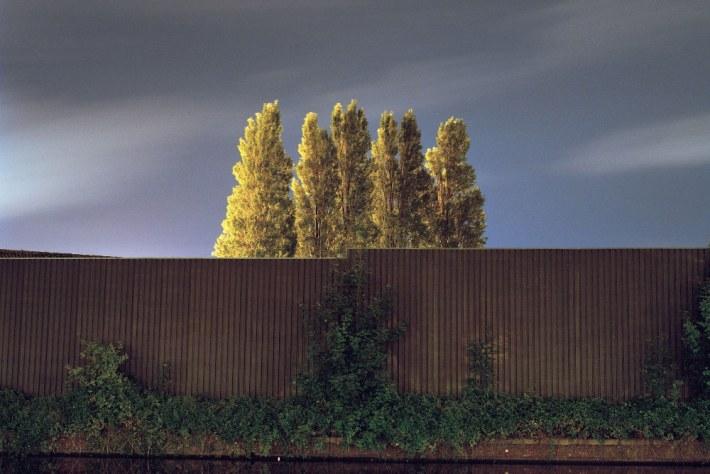 Sander Meisner - Six Trees