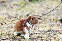back_a_bunny_0315_18