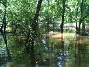 Beautiful swamp
