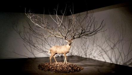 myeongbeom_kim_tree_antlers
