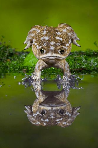 frog_emersion