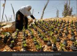 nytl_teargas_planters