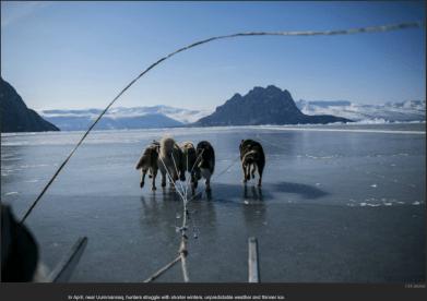 nytl_ice_lake_dogs