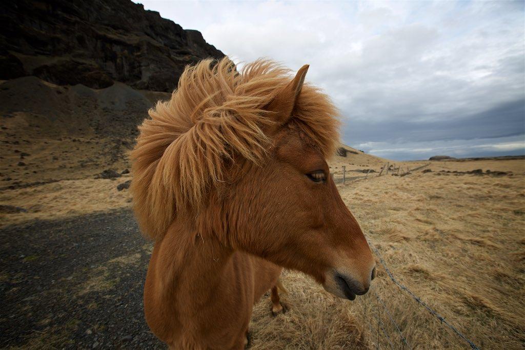 Traversing Icelands Reynisfjara, Skaftafell and Hvannadalshnúkur 3