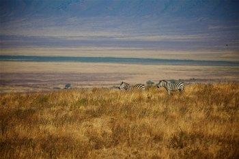 Safari 15
