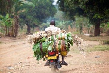 The Uganda countryside 15