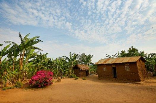 The Uganda countryside 41