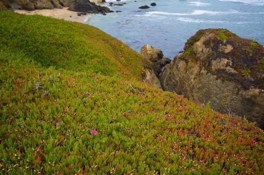 Pigeon point 37
