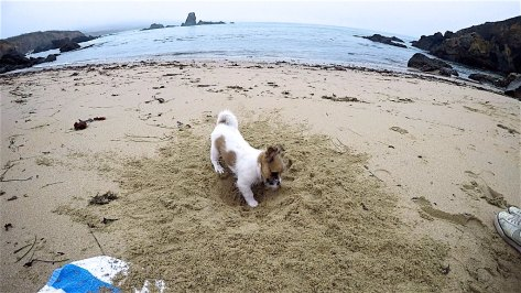 Inchy loves to dig in the sand, she is so tiny that she falls in