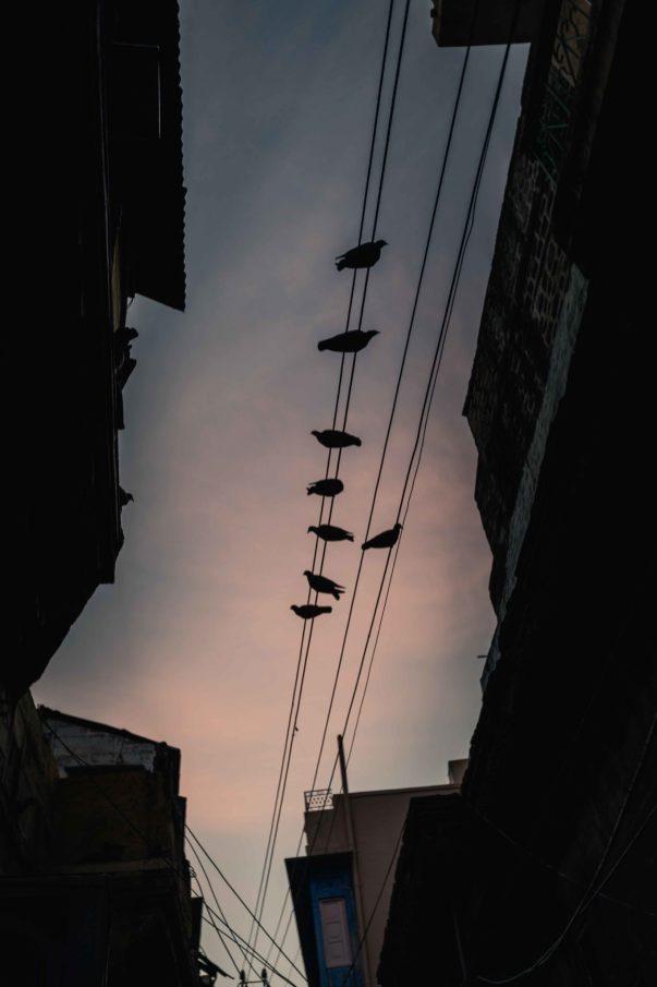Rooftops-5