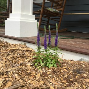 planting perennials