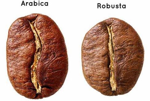 Grano de café arábica y robusta.