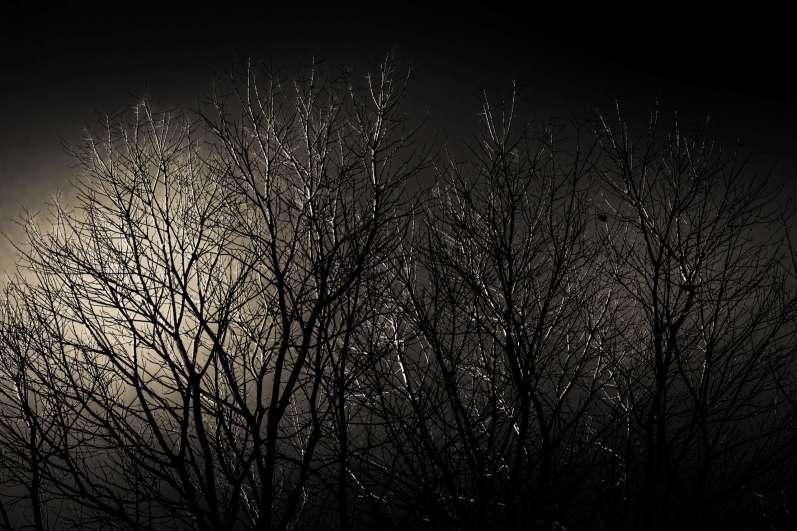 PEUGEOT-3008-FILM-WINTER-Tree-2