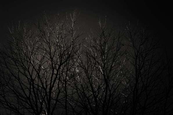 PEUGEOT-3008-FILM-WINTER-Tree