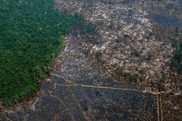 pandemias-bosques