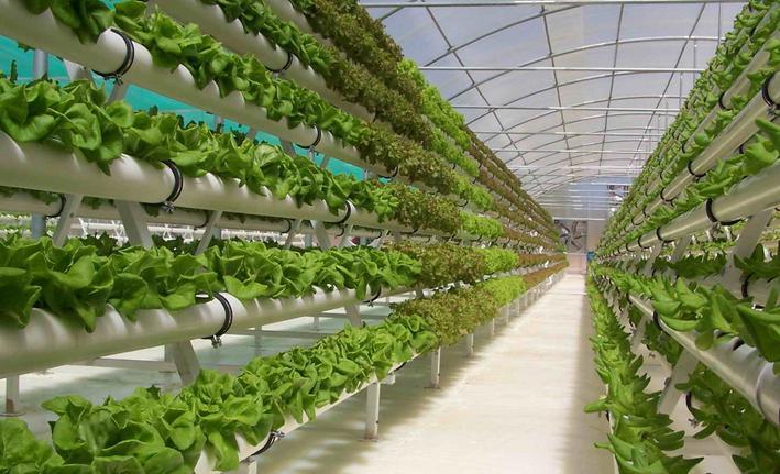 Bisnis Tanaman Sayur Organik