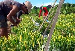 7 Peluang Usaha Lulusan Sarjana Pertanian yang Potensial