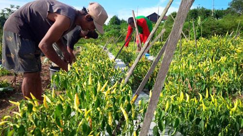 Usaha Hortikultura