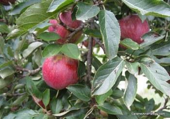 Fresh organic fruit - a great start