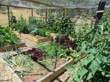 Australian style raised bed garden