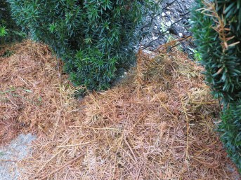 Hedge clipping mulch
