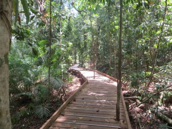 Tropical forest walkway, Daintree Rainforest, Queensland