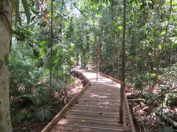 Tropical forest walkway, Daintree Rainforest, Queensland