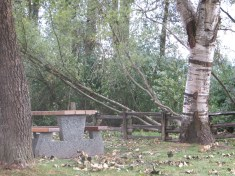 Recent windstorm caused tree damage & 3 day power outages