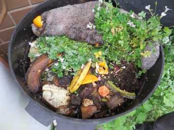 Worm farm kitchen scraps