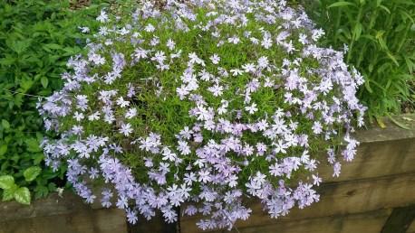 Blossoms galore