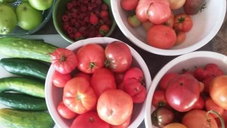 Morning's garden bounty