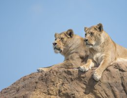 Is West Midland Safari Park worth visiting without kids
