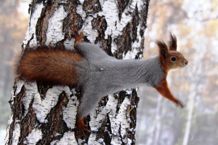 LE-03282016-Squirrel--31-.jpg