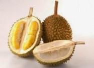 cara menghindari mabuk durian